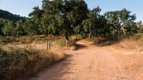 沙子道路穿过森林 库存图片