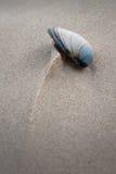 沙子雕刻的壳 图库摄影
