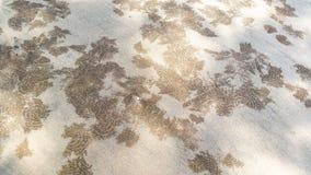 沙子饮水器螃蟹的样式 图库摄影