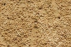 沙子饮水器螃蟹和沙子药丸 免版税库存照片