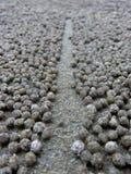 沙子饮水器螃蟹球之间的被扫清的道路 库存图片