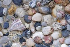 沙子贝壳 免版税库存图片