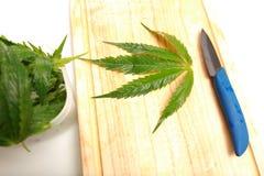 沙拉准备的新鲜的大麻叶子 医疗大麻 免版税库存图片