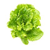 沙拉叶子 新鲜的绿色莴苣叶子 免版税库存照片