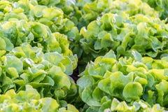 沙拉是主要膳食 免版税图库摄影