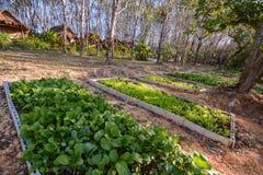 沙拉种田 免版税库存照片