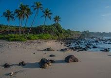沙波蓝天和棕榈树 免版税库存图片