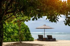 沙滩伞和sunbed在海滩在异乎寻常的树下 库存照片