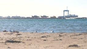 沙滩和有小船的海口的看法与海鸥的在码头 股票视频