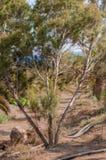 沙漠乔丹petra照片岩石结构树 库存照片