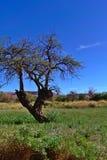 沙漠乔丹petra照片岩石结构树 免版税库存图片