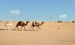沙漠乘驾 免版税图库摄影