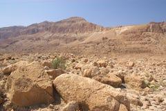 沙漠以色列judea 免版税图库摄影