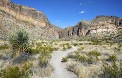 沙漠供徒步旅行的小道 免版税图库摄影