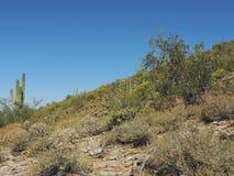 沙漠倾斜 免版税库存照片