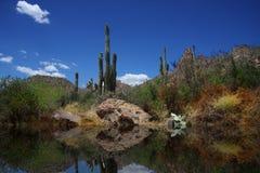 沙漠反映 免版税库存图片