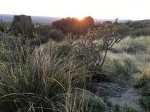 沙漠叶子 免版税库存图片
