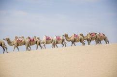 沙漠和有蓬卡车 库存照片