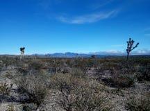 沙漠在圣路易斯波托西 免版税库存图片