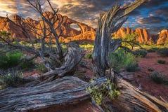 沙漠地板,死的树,拱门国家公园 库存图片