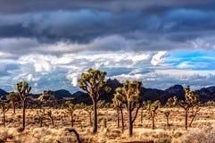沙漠场面在约书亚树 图库摄影