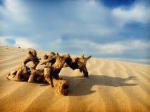 沙漠场面 库存图片