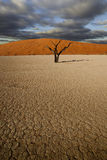 沙漠场面 图库摄影