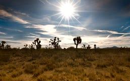 沙漠场面 免版税库存图片