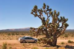 沙漠多灰尘的路 免版税图库摄影