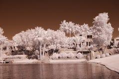 沙漠家庭湖 免版税库存图片