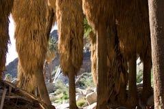 沙漠山坡棕榈树 库存照片