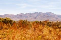 沙漠山景在一好天儿 库存照片
