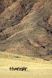 沙漠山纳米比亚斑马 免版税库存图片