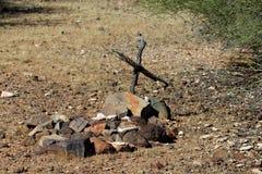 沙漠岩石堆坟墓在Sonoran沙漠 库存图片