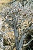 沙漠布什 库存图片