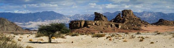 沙漠干燥以色列偏僻的negev结构树 库存照片