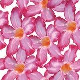 沙漠座莲桃红色花 无缝的模式 在白色bac的剪影 库存照片