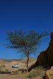 沙漠徒步旅行队和金合欢树 免版税库存图片