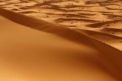 沙漠摩洛哥撒哈拉大沙漠 免版税库存图片