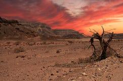 沙漠日落 库存图片