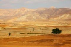 沙漠早晨西奈 库存图片