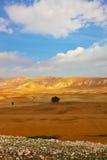 沙漠早晨西奈 免版税图库摄影