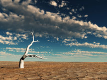 沙漠早晨 免版税库存图片