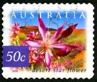 沙漠星花澳大利亚邮票 库存照片