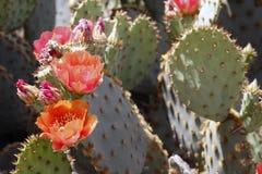 沙漠春天 免版税库存图片
