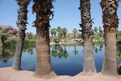 沙漠棕榈树绿洲 图库摄影