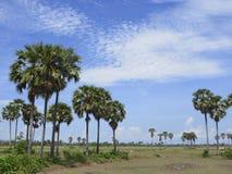 沙漠棕榈 库存照片
