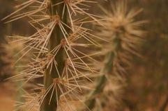 沙漠棘手的植物  免版税库存图片