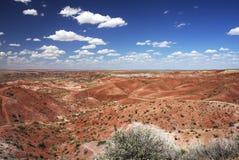 沙漠森林被石化的np绘画 图库摄影