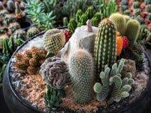 沙漠植物到罐里 免版税库存图片